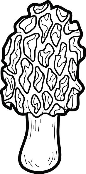 Coloring Book Edible Mushrooms Morel Stock Illustration