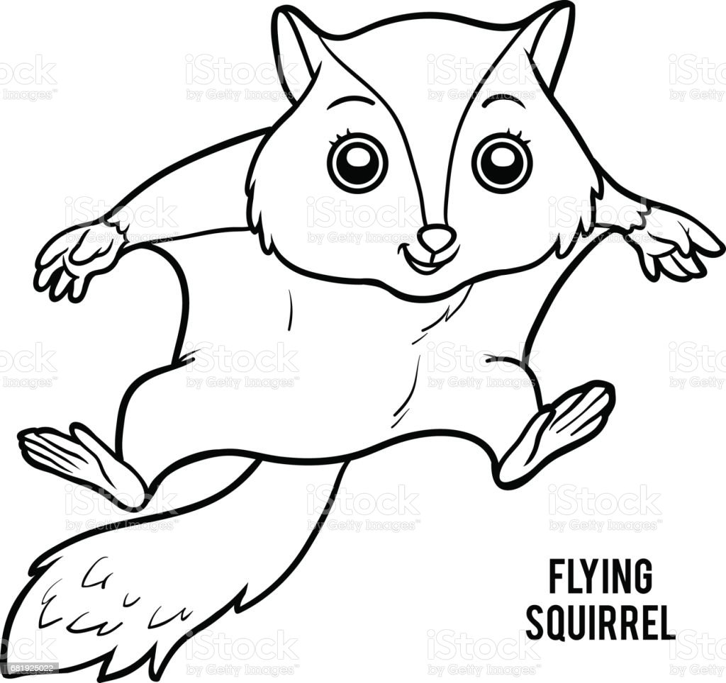 Coloring Book Flying Squirrel Stock Vector Art More Images Of