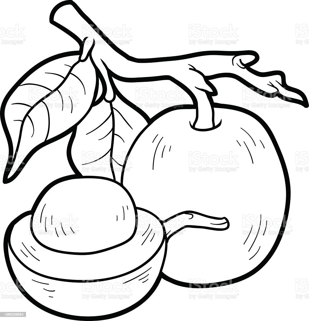 Coloring Book For Children Fruits And Vegetables Ximenia Royalty Free