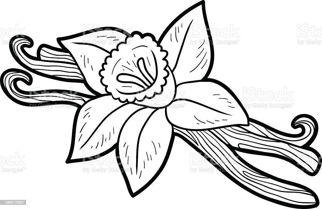 Livre de coloriage pour les enfants fruits et l gumes vanille vecteurs libres de droits et - Vanille dessin ...