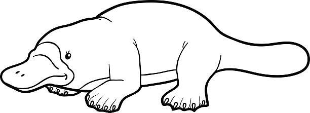 bildbanksillustrationer, clip art samt tecknat material och ikoner med coloring book for children: platypus - platypus