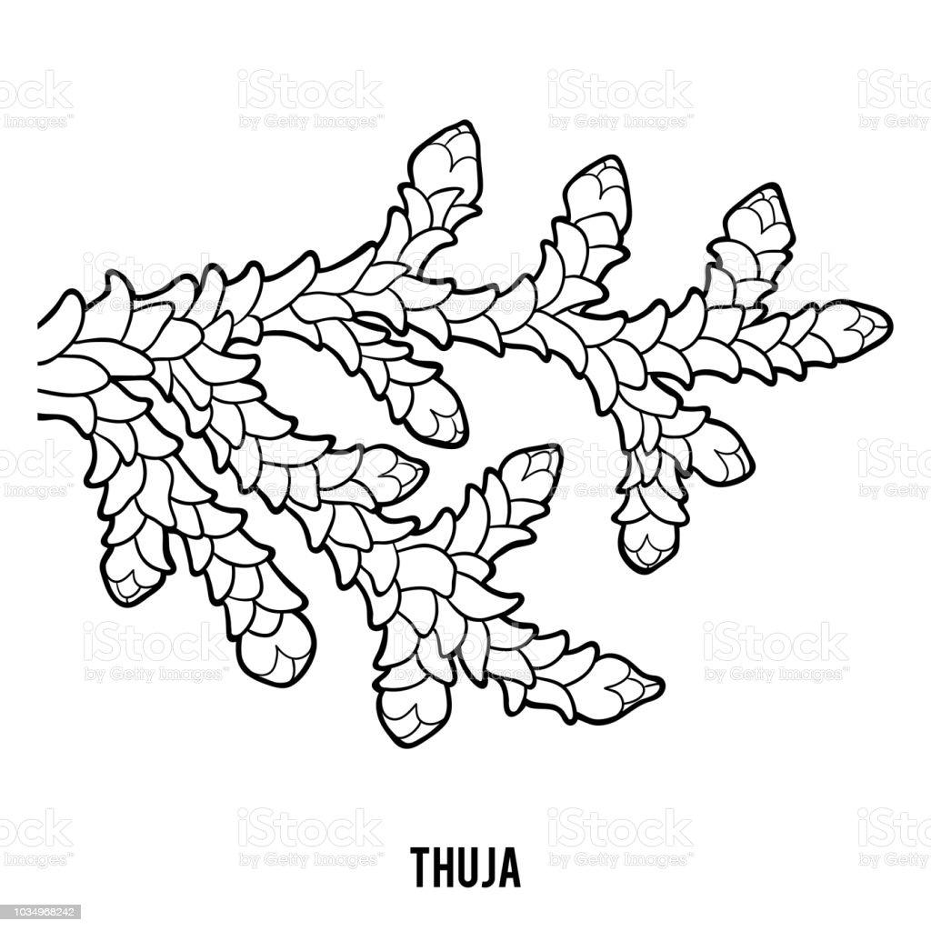 Coloring book for children, Thuja - illustrazione arte vettoriale