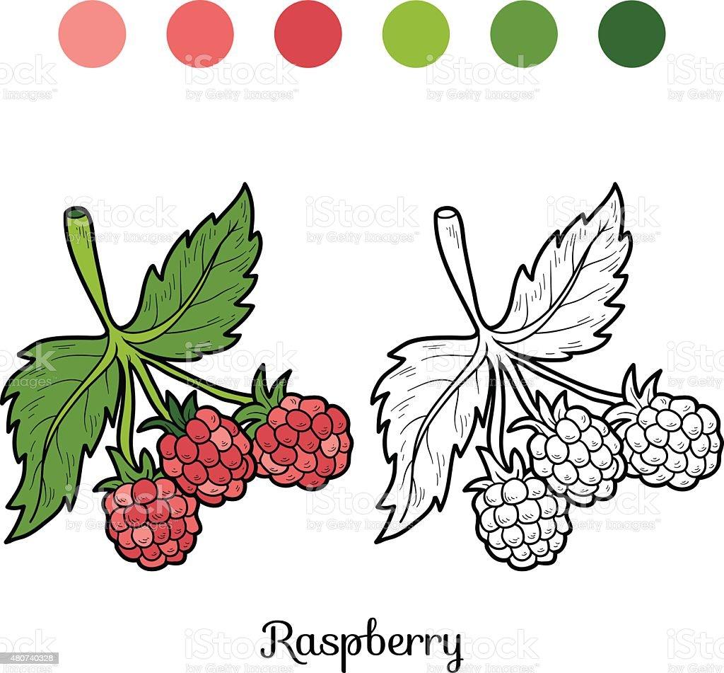 Kolorowanka Owoce I Warzywa Malina Stockowe Grafiki Wektorowe I Wiecej Obrazow 2015 Istock