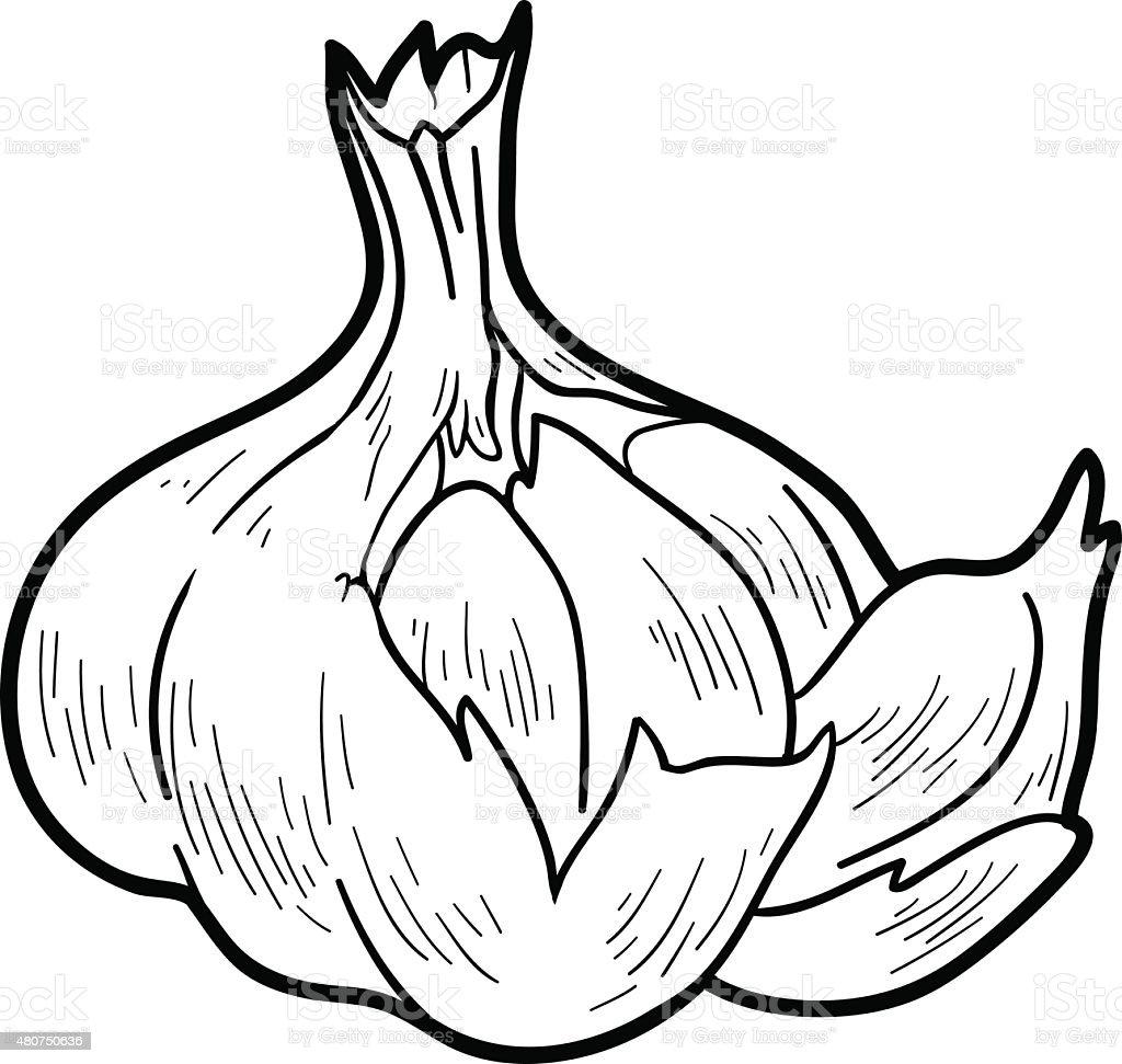 Kolorowanka Owoce I Warzywa Czosnek Stockowe Grafiki Wektorowe I Wiecej Obrazow 2015 Istock