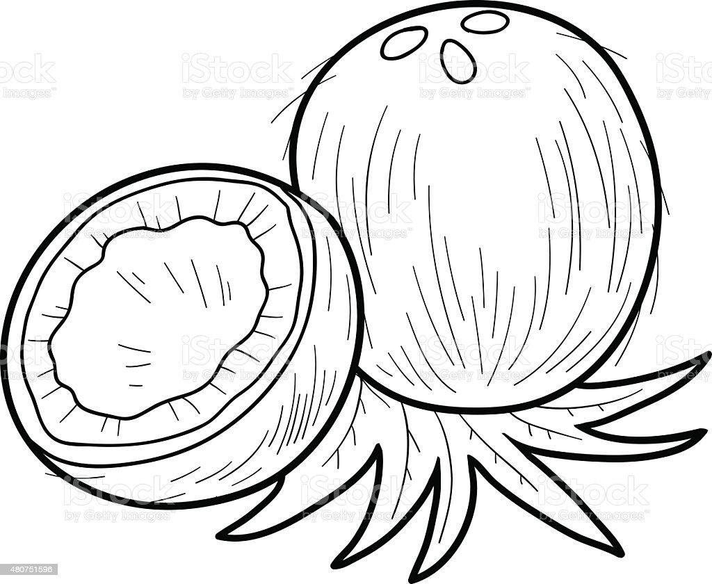 Libro Para Colorear Frutas Y Verduras Coconut - Arte vectorial de ...