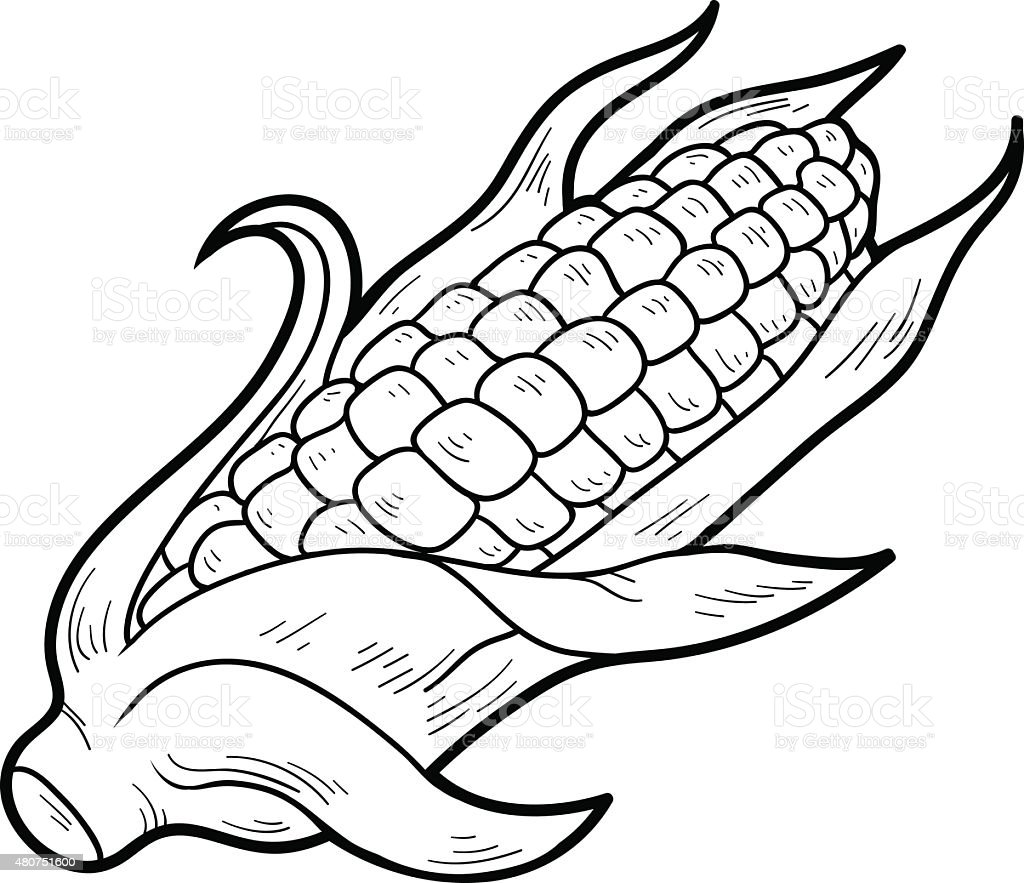 Coloring Book Fruits And Vegetables Corn Royalty Free Stock Vector Art