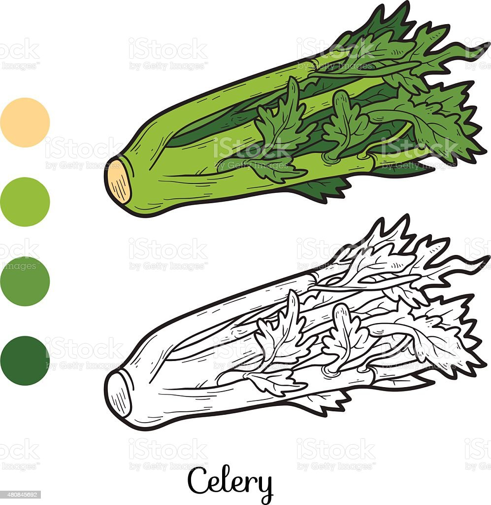 Coloring book: fruits and vegetables (celery) vector art illustration