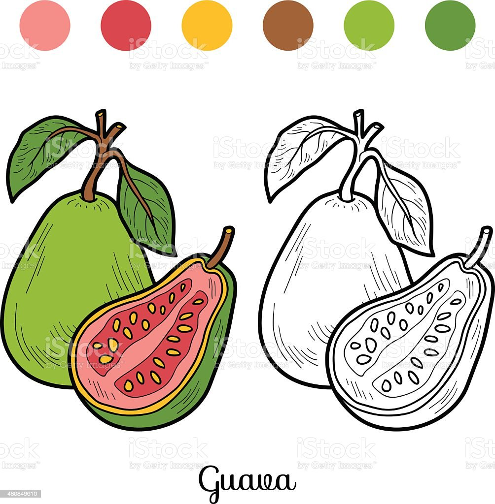 Coloring Book Fruits And Vegetables Guava Royalty Free Stock Vector Art