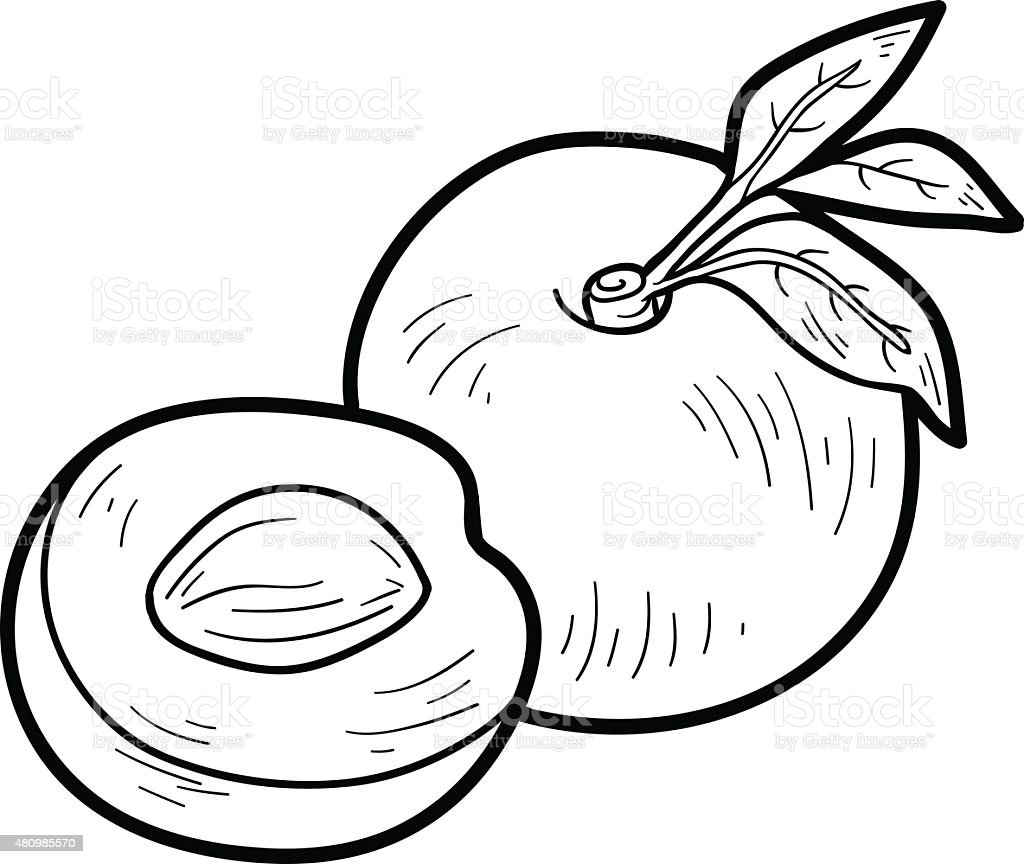 Coloring book: fruits and vegetables (nectarine) vector art illustration