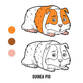 Coloring Page Of Guinea Pig Stock Illustration Download Image Now Istock