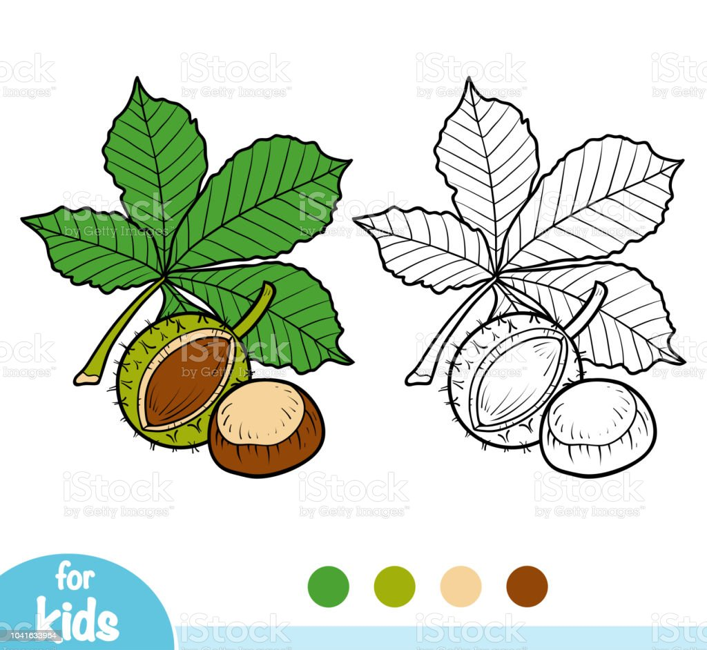 Coloring book, Horse Chestnut branch vector art illustration