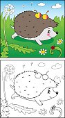Coloring Book or Page Cartoon Illustration of Funny hedgehog and Insect for Children.