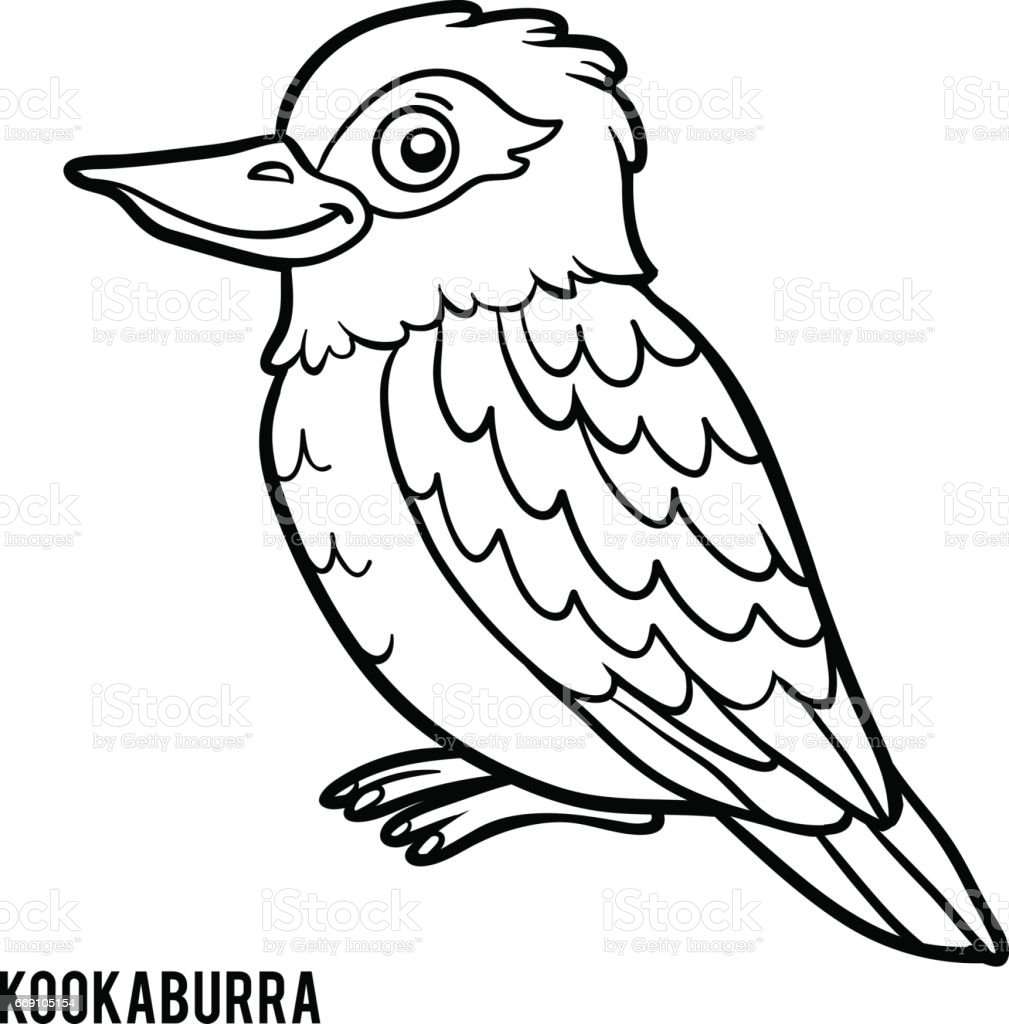 Coloring Book Kookaburra Royalty Free Stock Vector Art Amp More