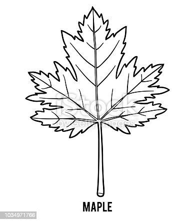 Boyama Kitabı Akçaağaç Yaprağı Stok Vektör Sanatı Akçaağaç Ağacı