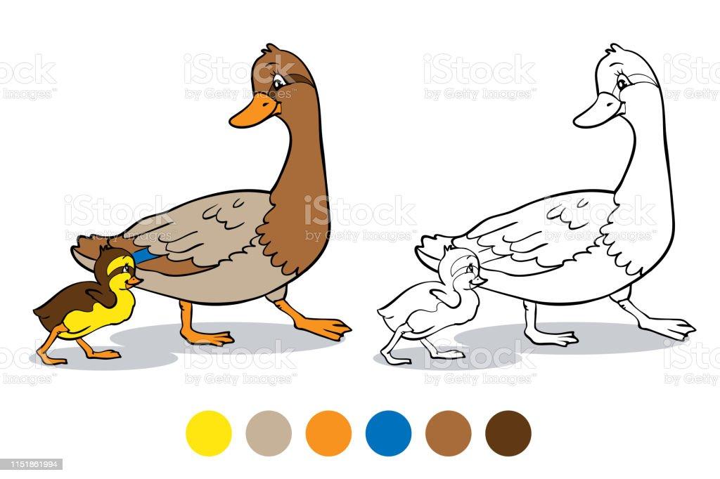 Boyama Kitabi Anne Duck Ve Ordek Yavrusu Stok Vektor Sanati