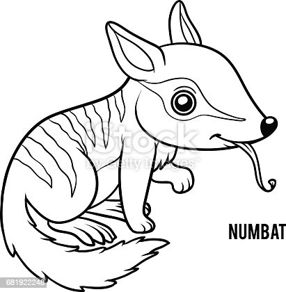 Coloring Book Numbat Stock Vector Art & More Images of