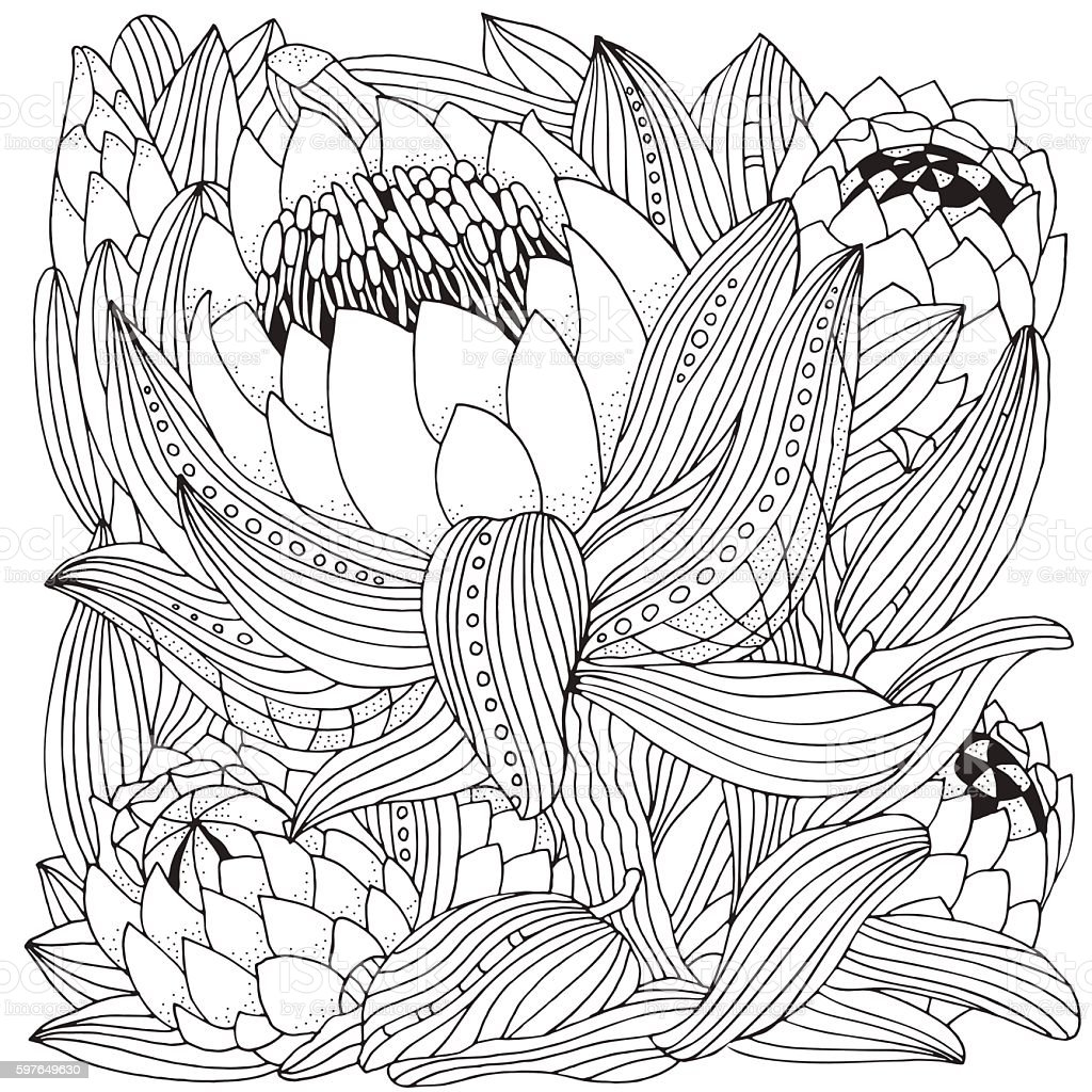 Coloring Book Page For Adult And Children Protea Flower Art Royalty Free