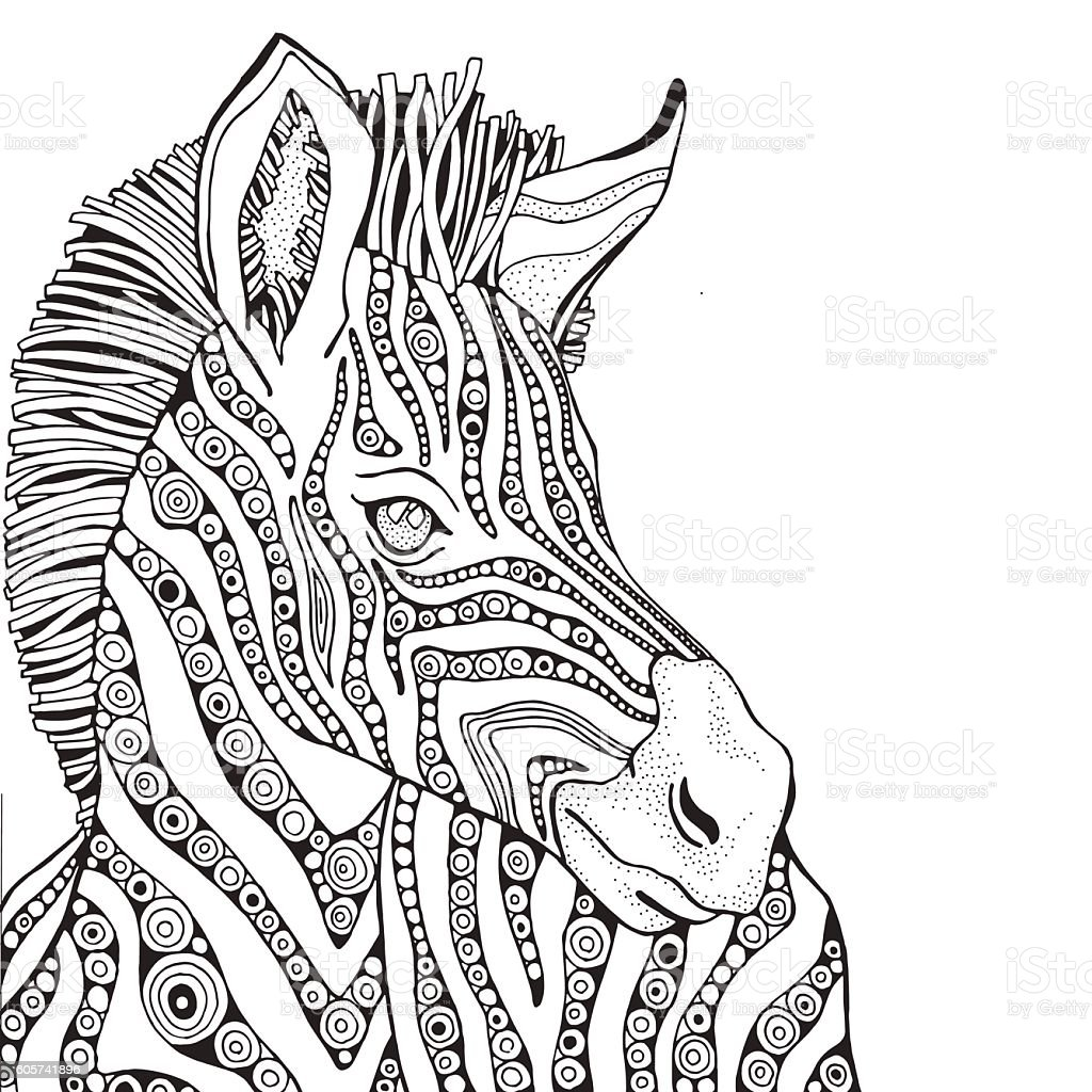 Coloring book page for adult and children zebra stock Coloring book zebra