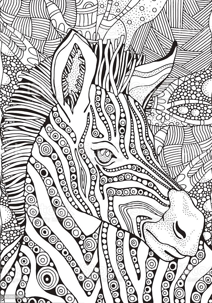 coloring book page for adult and children zebra stock
