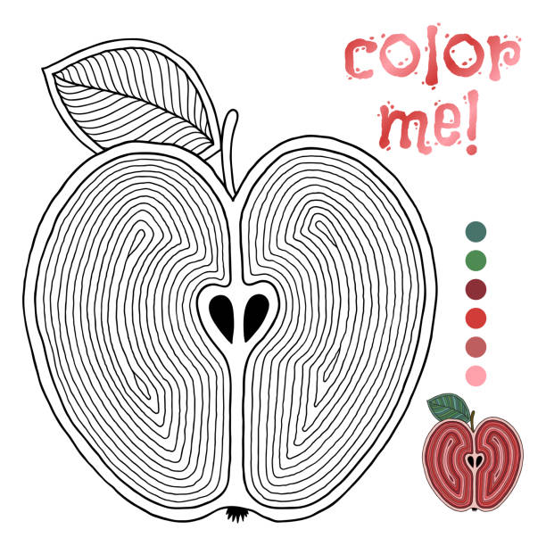 Coloring book page for children with outlines of apple – artystyczna grafika wektorowa