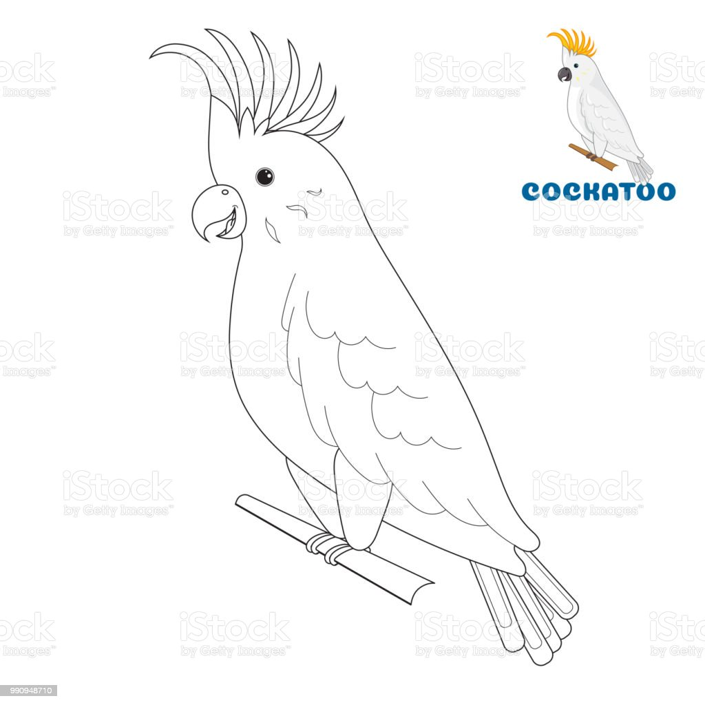 Coloring Book Page For Preschool Children With Colorful Australian Cockatoo And Outlines To Color Vector