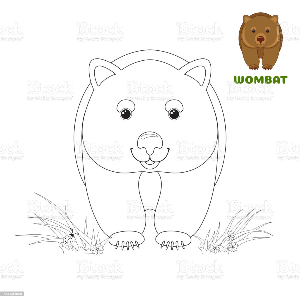 Coloring Book Page For Preschool Children With Colorful Australian Wombat And Outlines To Color Vector