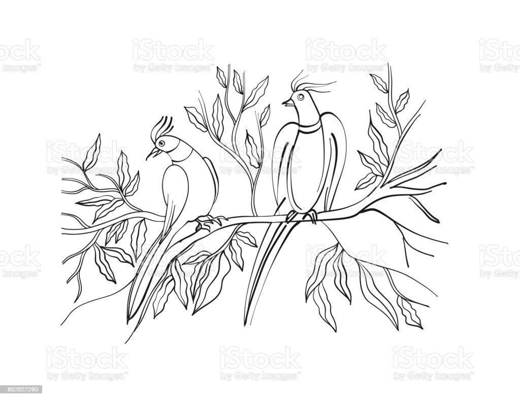 Boyama Kitabı Sayfası Süs Egzotik Kuşlar Elle çizilmiş Hat Sanatı