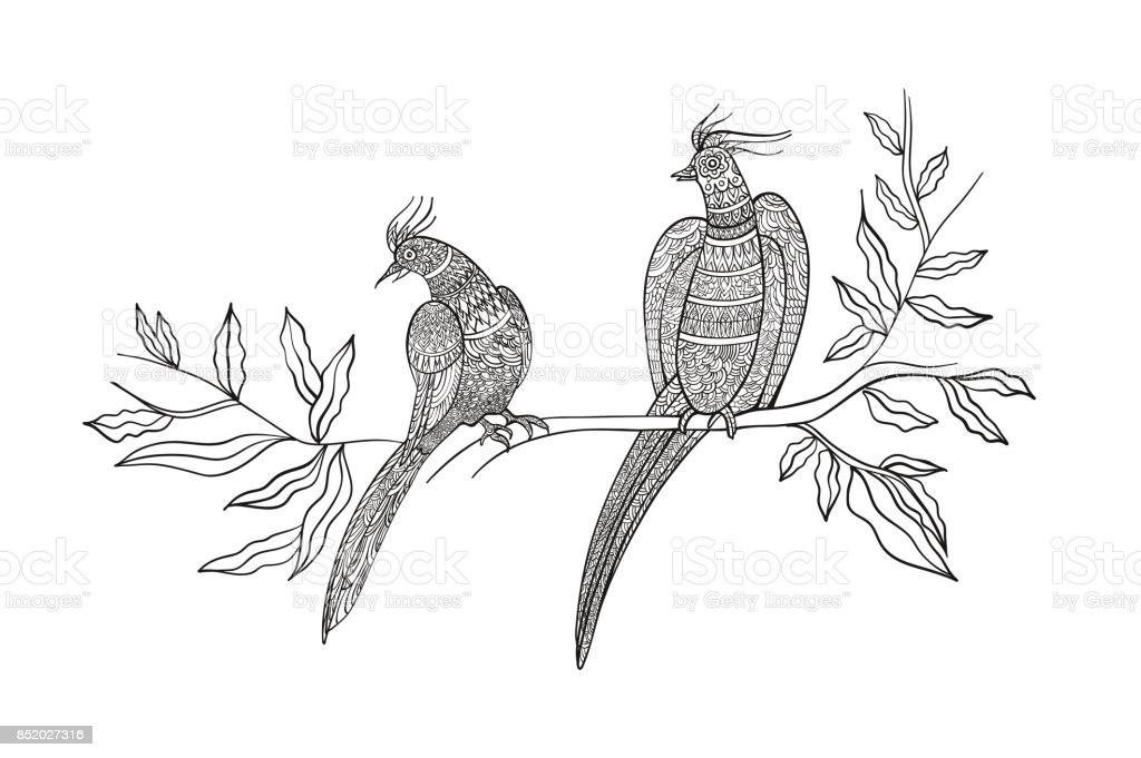Coloring Book Page Ornamental Exotic Birds Hand Drawn Line Art Black And White