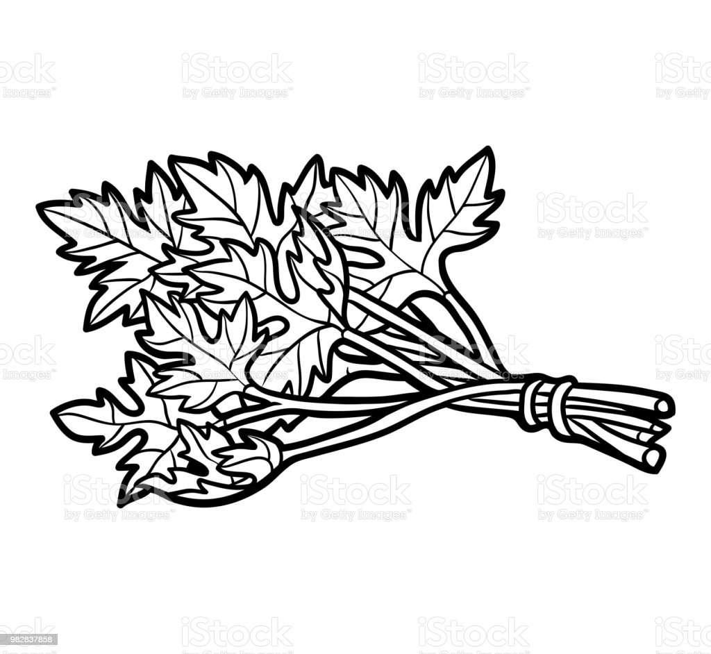 Coloring Book Parsley Stock Vector Art More Images Of Agriculture