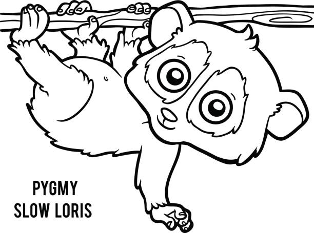 Top Loris Clip Art Vector Graphics And Illustrations Istock