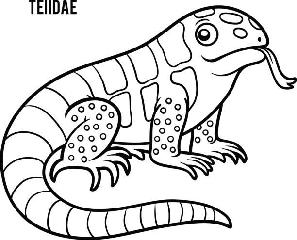 Coloring Book Teiidae Vector Art Illustration