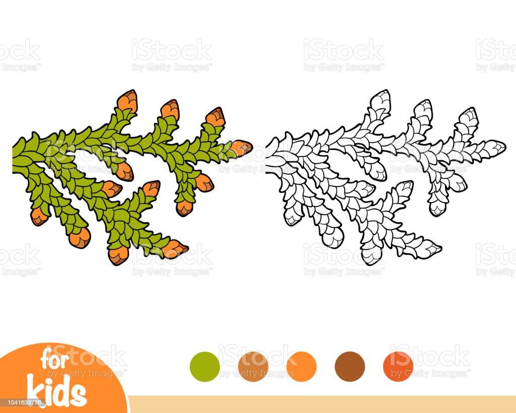 Coloring book, Thuja branch - illustrazione arte vettoriale