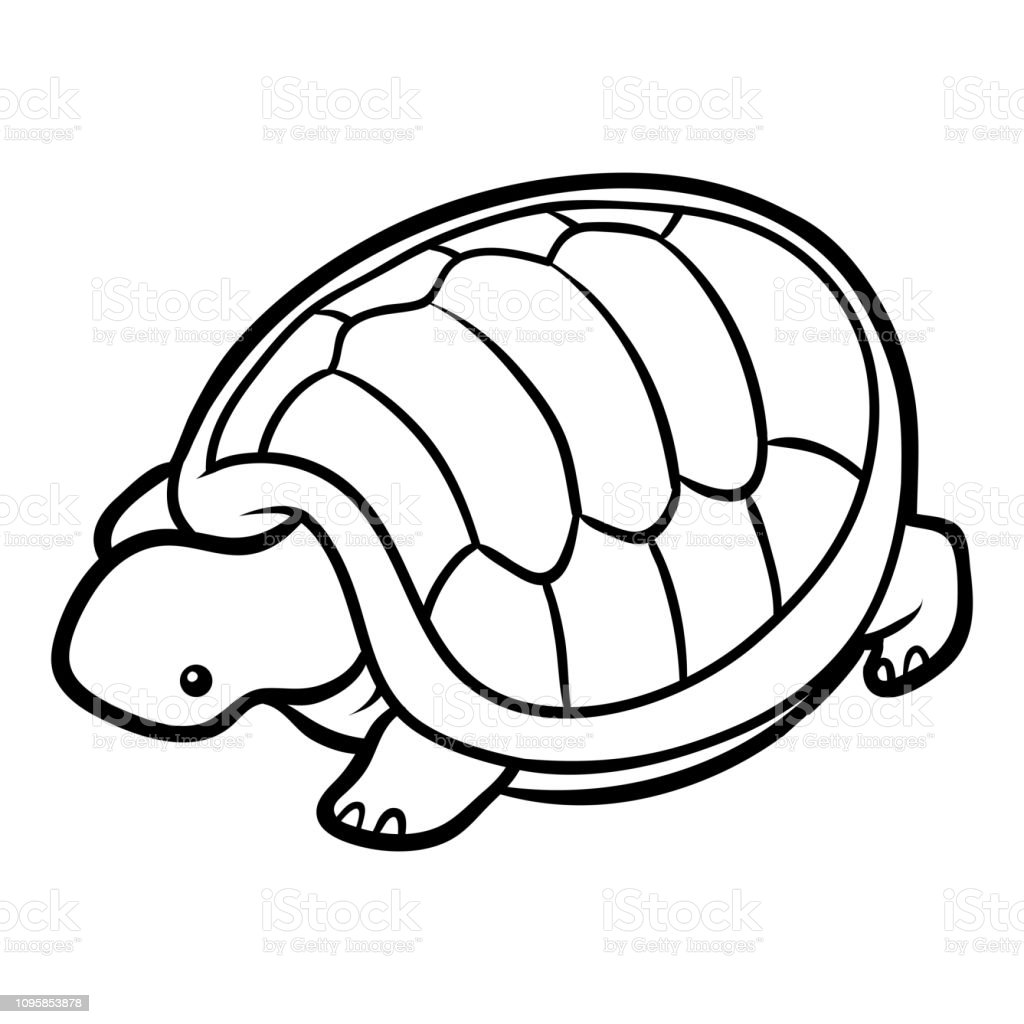 Coloring Book Tortoise Stock Illustration - Download Image ...