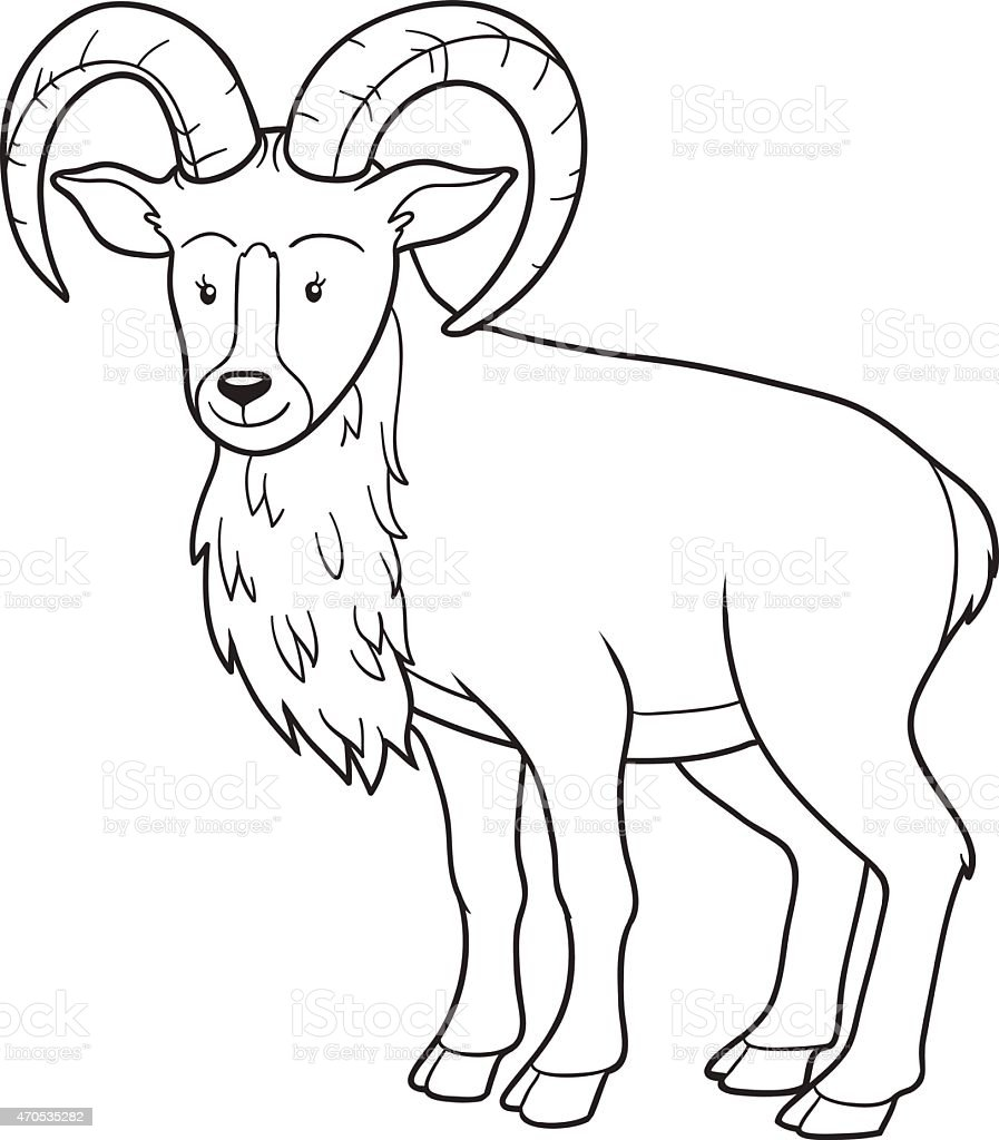 Coloring book (urial) vector art illustration