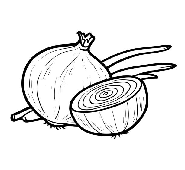 Best Onions Illustrations, Royalty-Free Vector Graphics ...