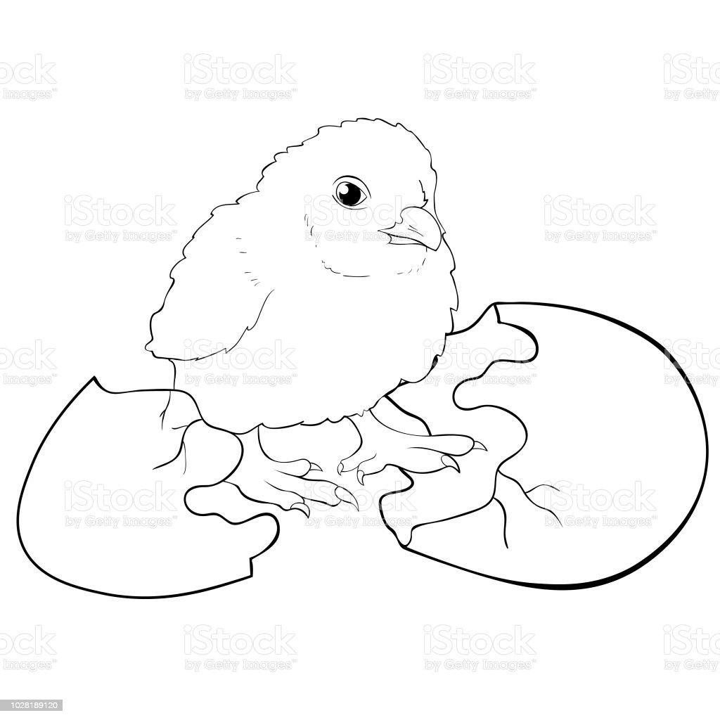 Boyama Tavuk Bebek Bir Yumurtadan Yumurtadan Vektör çizim Stok