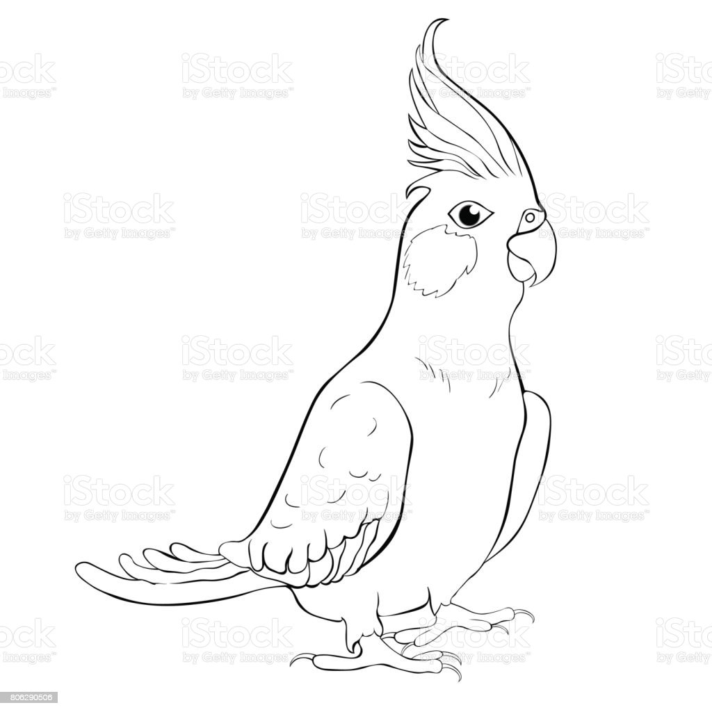 Corella Perisi Papağan Papağan Aile Boyama Vektör çizim Stok Vektör