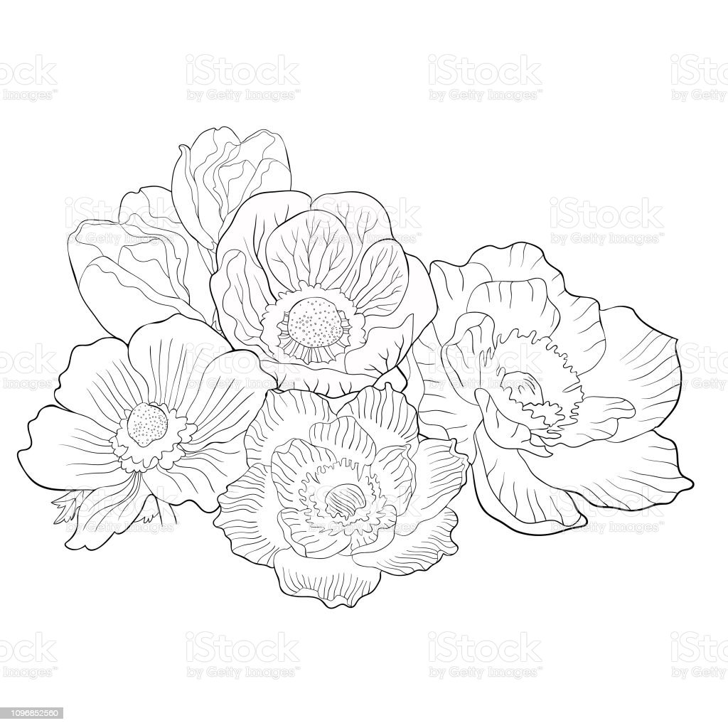 Malvorlagen Blume Blüte Japanische Anemone Vektorillustration Stock