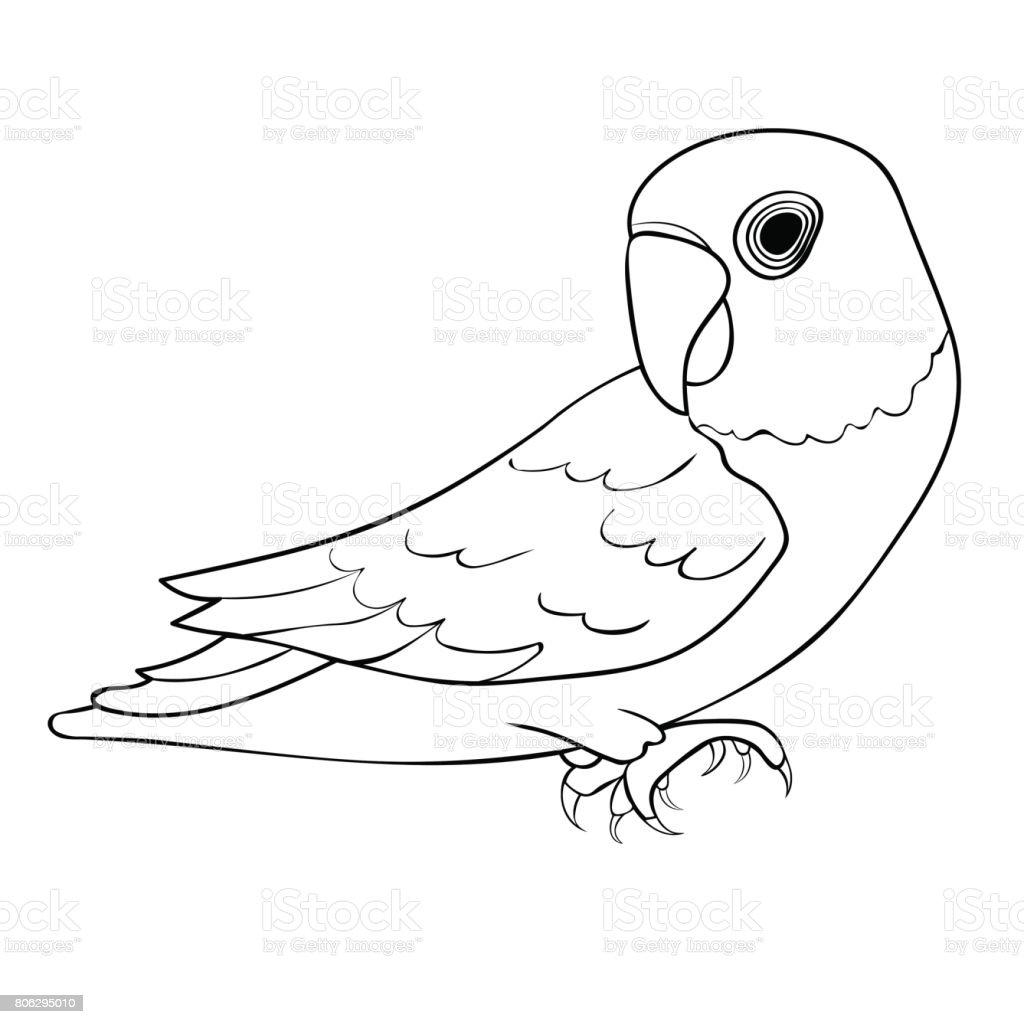 Maskeli Cennet Papağanı Mavi Papağan Boyama Vektör çizim Stok Vektör