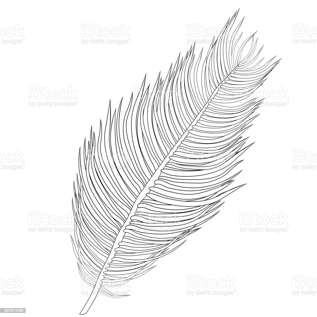 coloring-natural-tropical-palm-leaves-vector-illustration-vector-id937371098