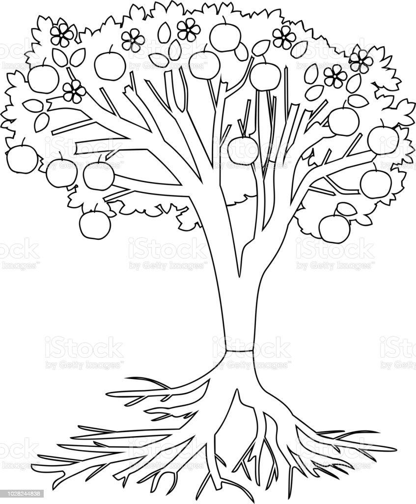 Malvorlagen Apfelbaum Mit Wurzeln Und Früchte Stock Vektor Art und ...
