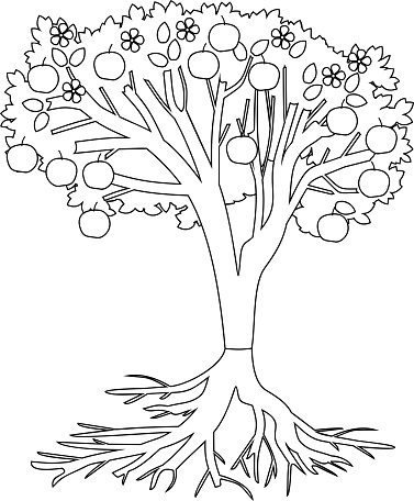 Coloring Page Apple Tree With Root System And Fruits Stock