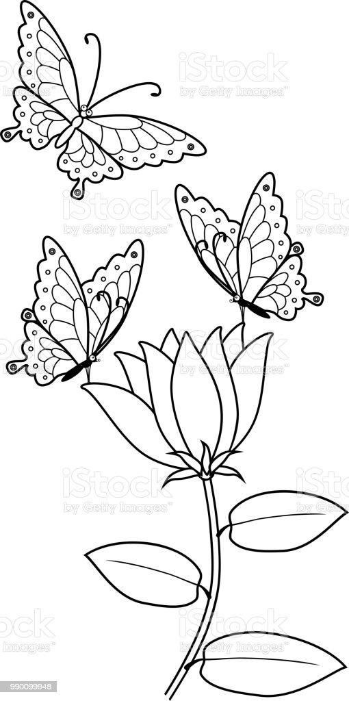 Malvorlagen Schmetterlinge Auf Blumen Stock Vektor Art Und Mehr