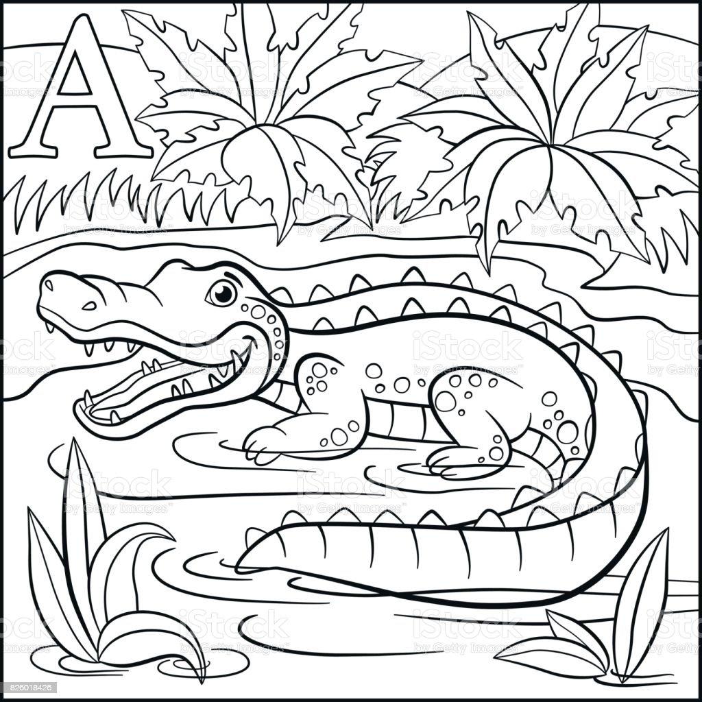 Boyama Sayfasi Karikatur Hayvanlar Alfabe A Timsah Icin Oldugunu