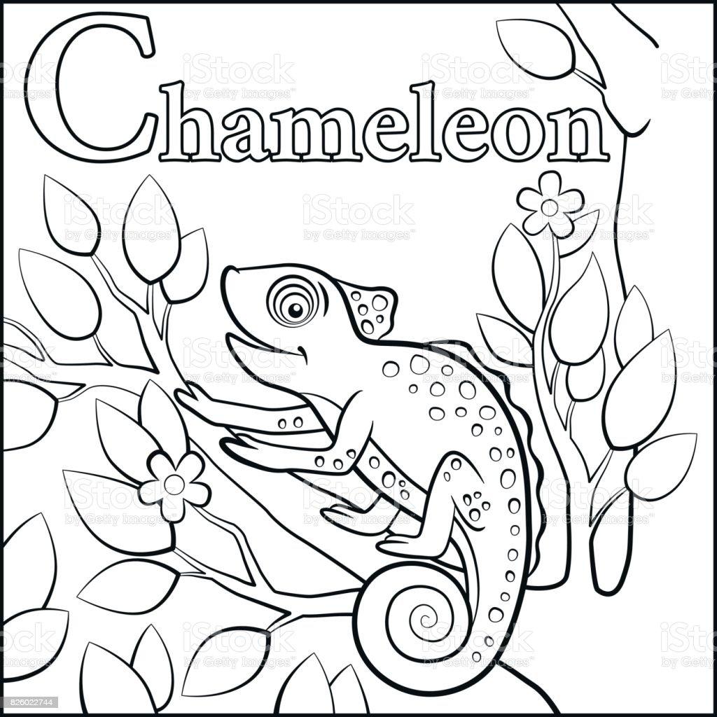 Malvorlagen Cartoon Tiere Alphabet C Steht Für Chamäleon Stock ...