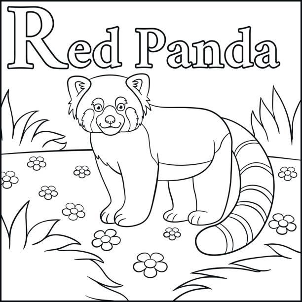 Vectores de Panda Rojo y Illustraciones Libre de Derechos - iStock