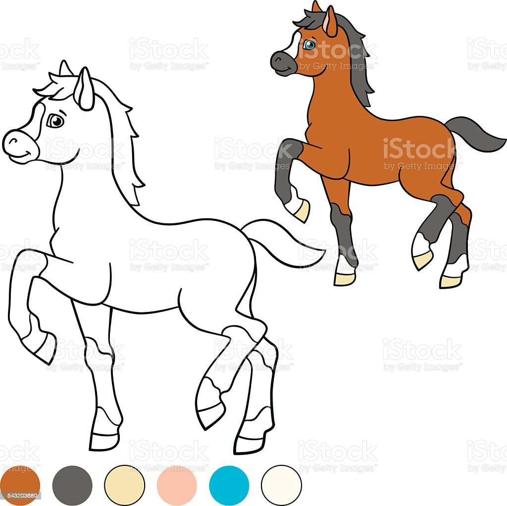 Coloring Page Color Me Horse Little Cute Foal Royalty Free