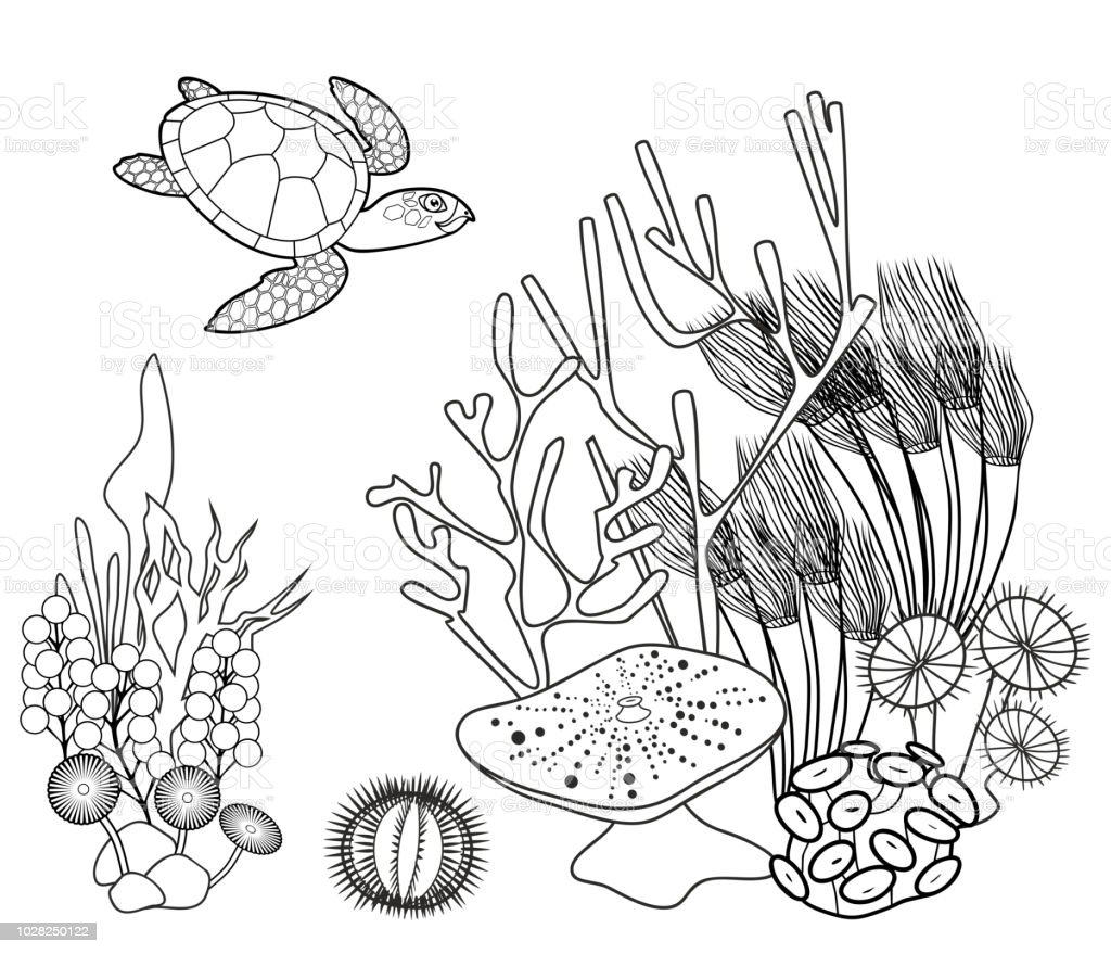 Coloring Page Coral Reef With Turtle And Other Marine Animals Royalty Free
