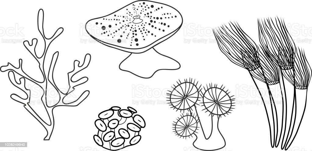 Ilustración de Página Para Colorear Diferentes Corales y más banco ...