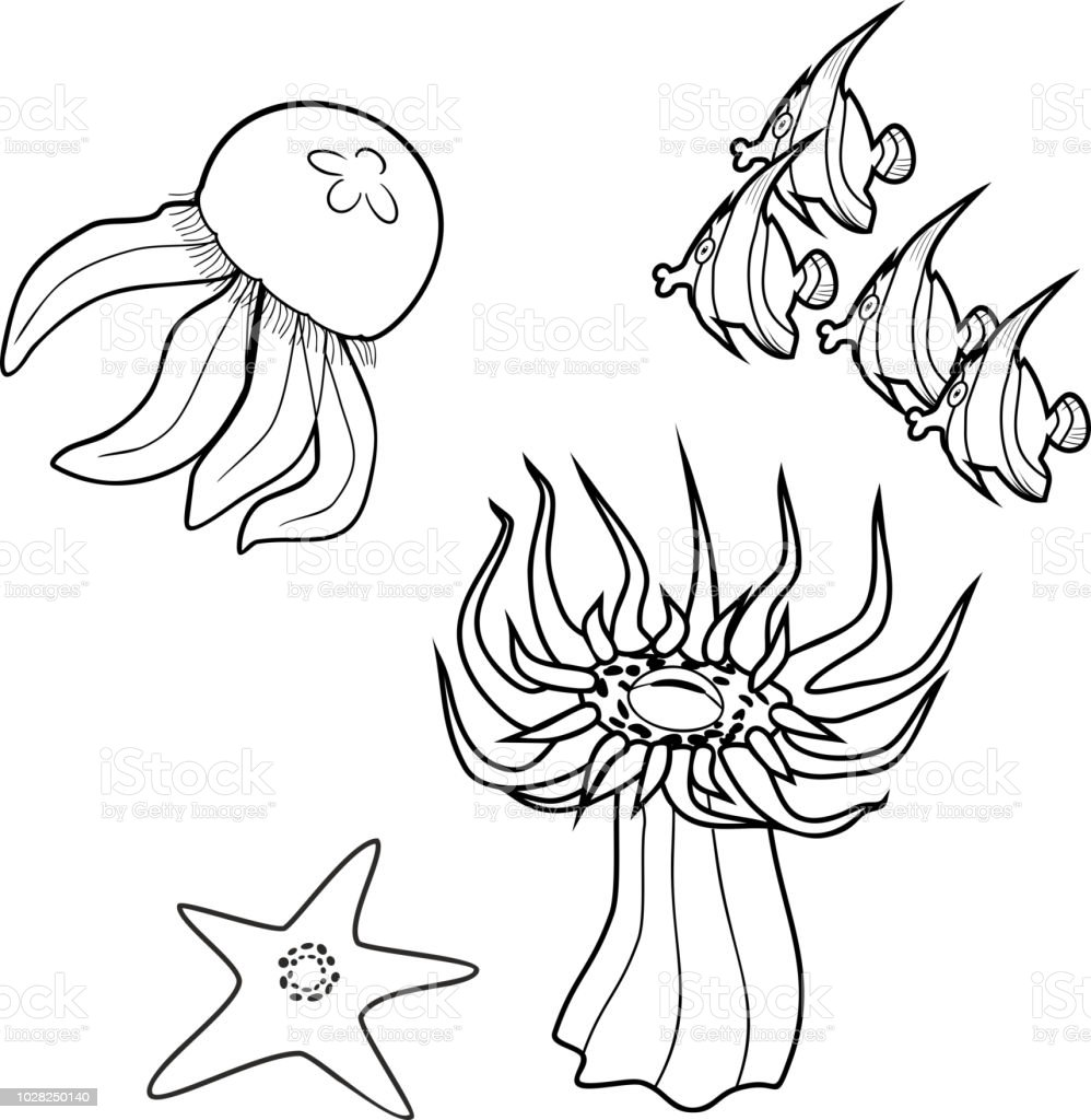 Coloring Page Different Marine Animals Stock Vector Art More